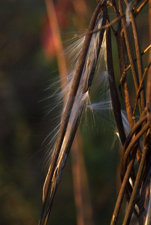 morning-leaves-11-1-2008_110108_0537.jpg