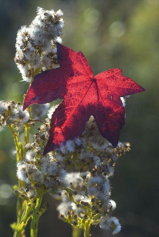 morning-leaves-11-1-2008_110108_0625.jpg