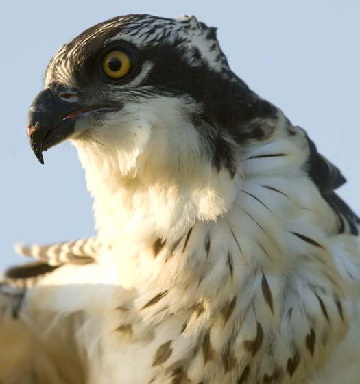 osprey-nest-7-13-2008_071308_6304.jpg