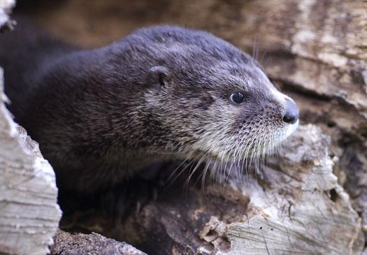 otter-5-24-2008_052408_8458.jpg