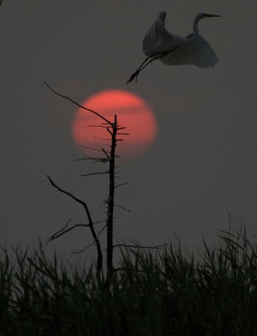 rookery-sunrise-7-18-2008_071808_6692.jpg
