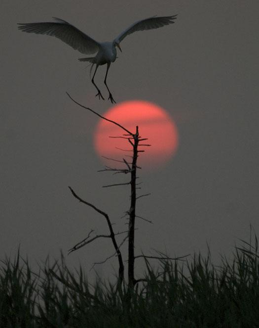 rookery-sunrise-7-18-2008_071808_6694.jpg