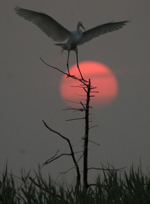 rookery-sunrise-7-18-2008_071808_6696.jpg