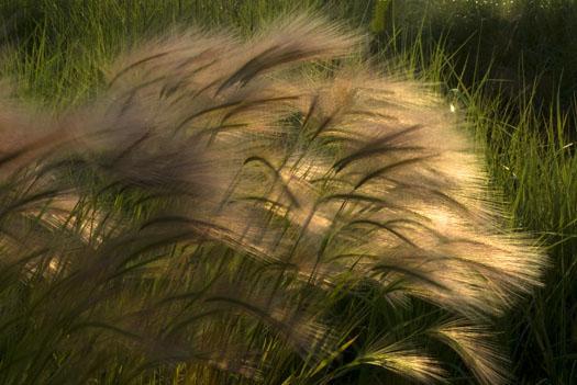 skimmer-egrets-marsh-grass-6-7-2009_060709_0893