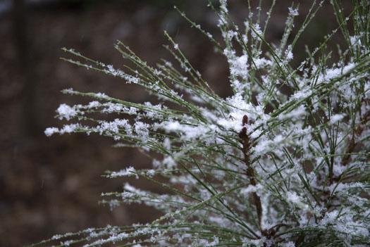 snow-in-yard-1-2-2009_010209_1612