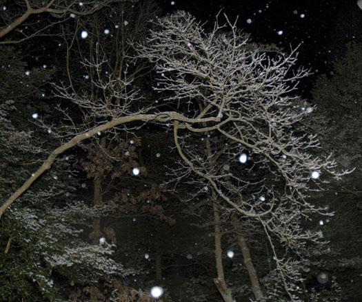 snowing-1-18-2009_011809_2046