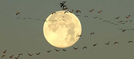 sunrise-12-24-2007-full-moon-snowies-heron-fowlers_3934copy1.jpg