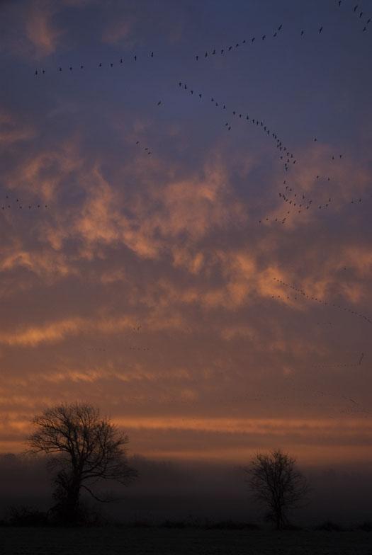 sunrise-2-3-2008-foggy-frosty-fowler-seal-cape_7317