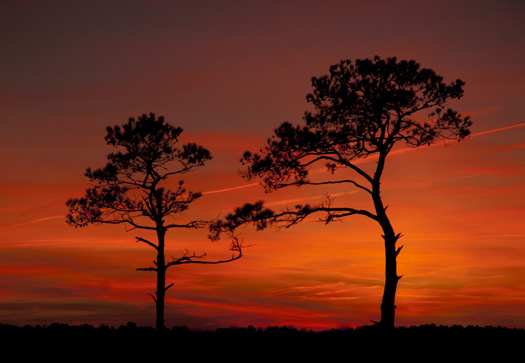 sunrise and sunset 1-8-2008 Primehook refuge_5014