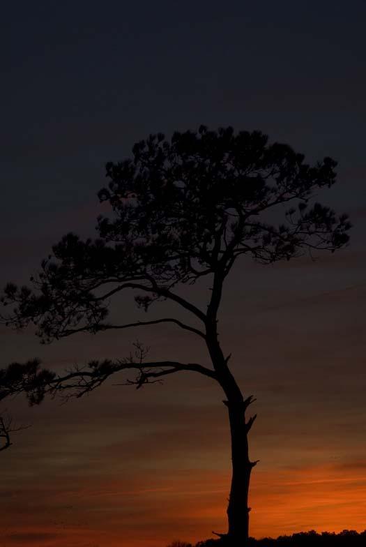 sunrise-and-sunset-1-8-2008-primehook-refuge_5029copy1.jpg