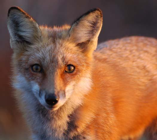 sunrise-fox-primehook-11-17-2007-016copy1.jpg