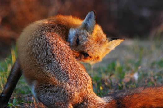 sunrise-fox-primehook-11-17-2007-022copy1.jpg