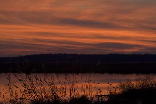 sunset-1-7-2008-primehook_4941copy1.jpg