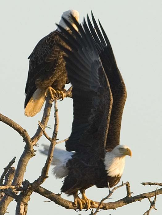 sunset-12-27-2007-2-eagles-heron-primehook_4154copy1.jpg