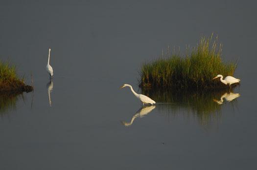 sunset-83-and-sunrise-egrets-841_3581