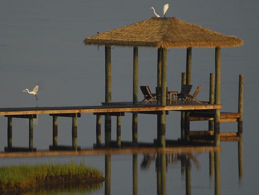 sunset-83-and-sunrise-egrets-84_1