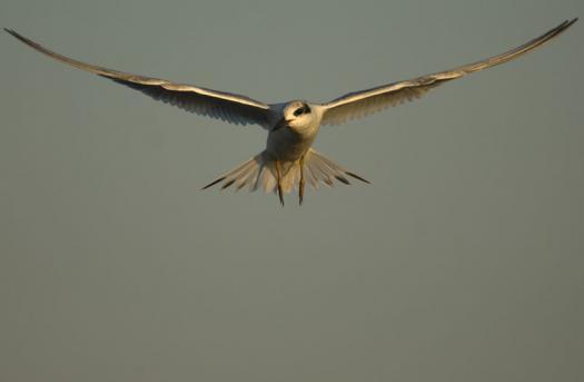 terns-egrets-10-2-2008_100208_0022.jpg