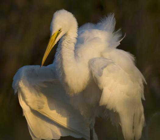 terns-egrets-10-2-2008_100208_0105.jpg
