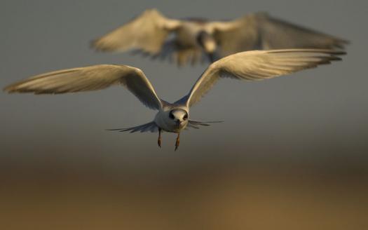 terns-egrets-10-2-2008_100208_9976.jpg