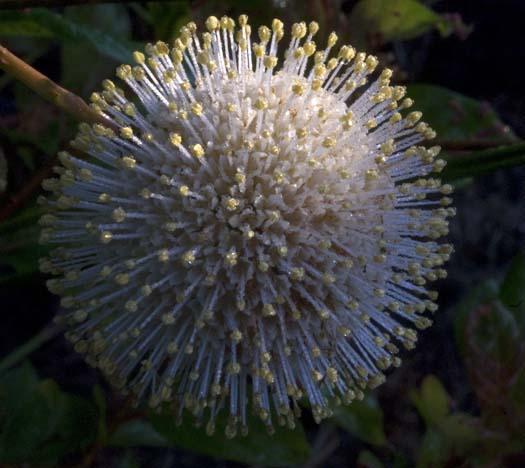 wildflowers-7-13-2008_071308_5857.jpg