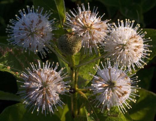 wildflowers-7-13-2008_071308_5876.jpg
